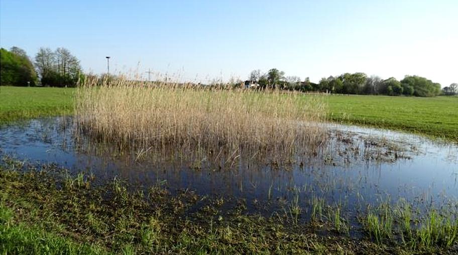 Der Reinheimer Teich bei Darmstadt ist ein Idyll