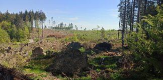 Wald im Taunus durch Trockenheit zerstört
